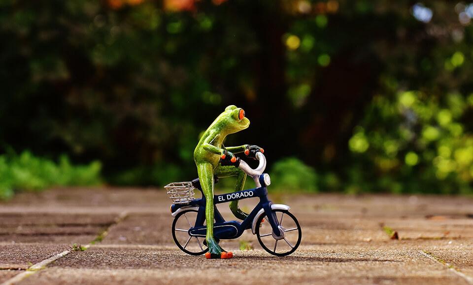 Frosch El Dorado Fahrradverleih Amrum Eldorado